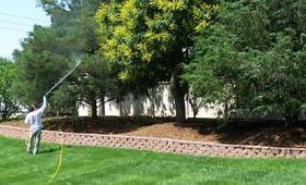 TenderCare employee spraying trees